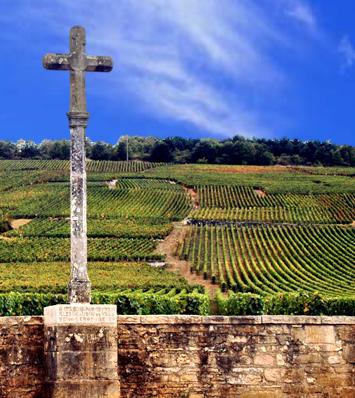 Romanée-Conti Vineyard